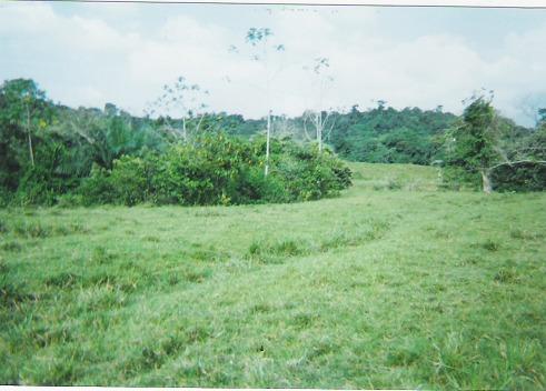 Finca en Puerto boyaca 106887, foto 5