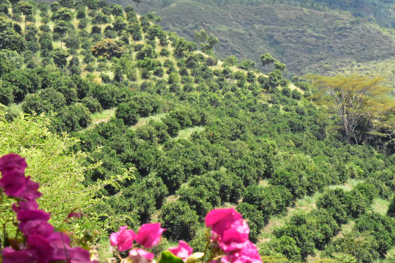Finca en Bugalagrande 106284, foto 1