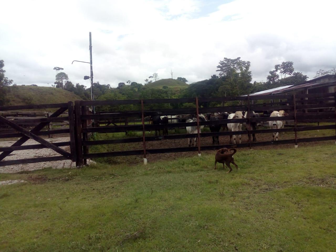 Finca en Puerto boyaca 106887, foto 26