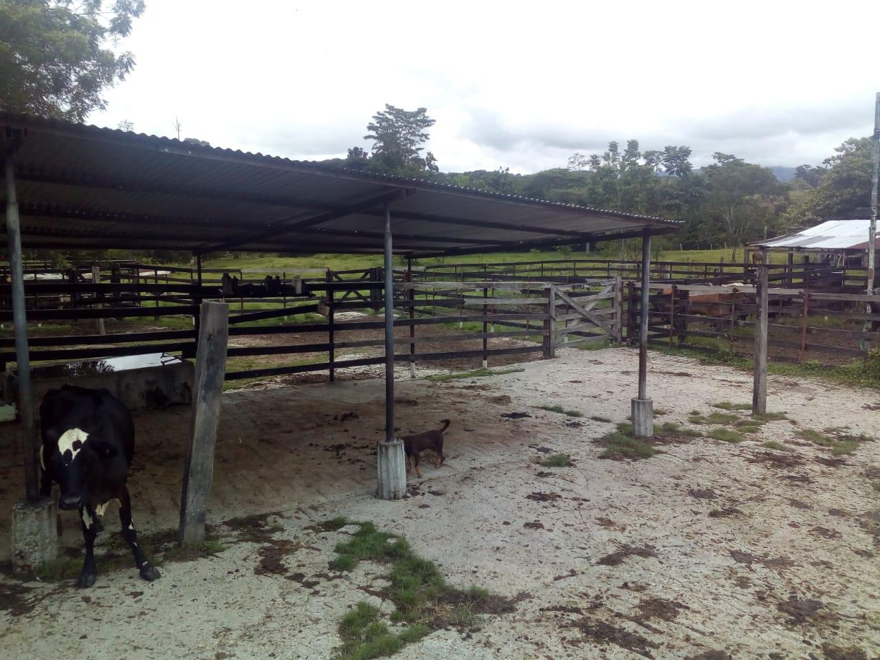 Finca en Puerto boyaca 106887, foto 31