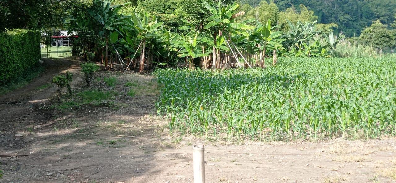 Finca en Pereira 96709, foto 4