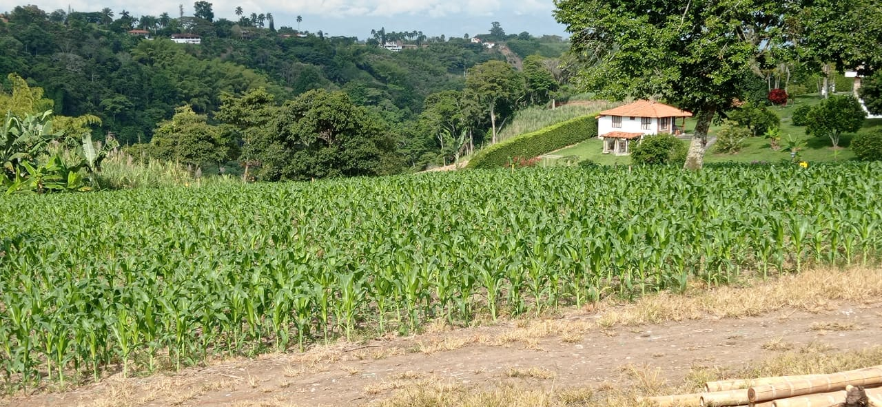 Finca en Pereira 96709, foto 5