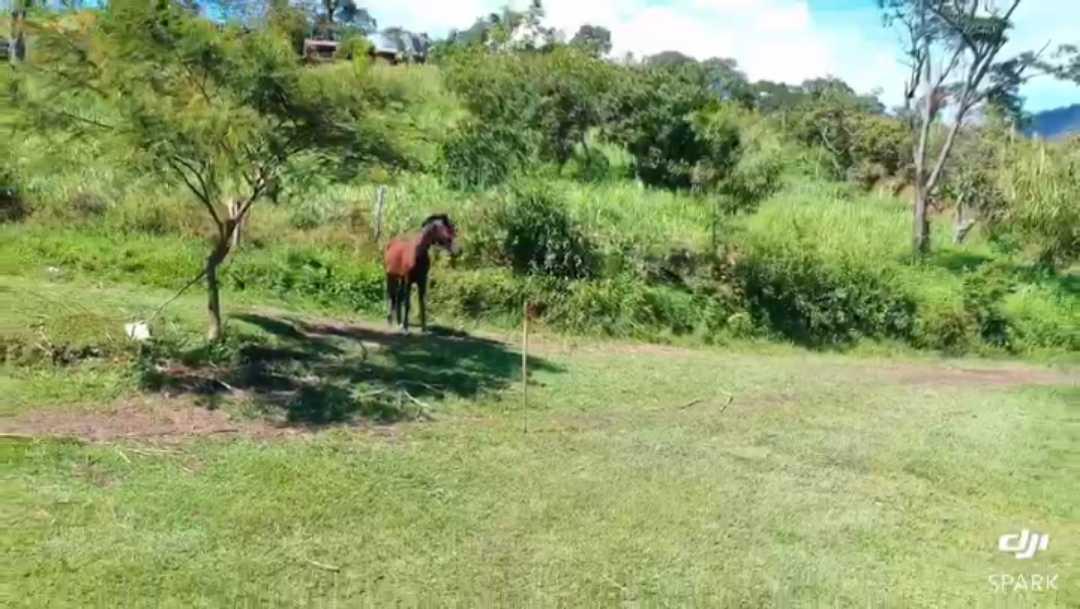 Finca en Chitaraque 109524, foto 23