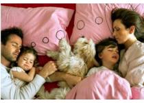 beneficios y contras de tener mascotas en casa