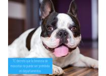 tc decreto que no se puede prohibir la tenencia de mascotas en departamentos