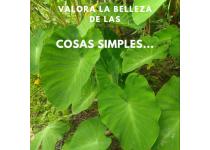 valora la belleza de las cosas simples