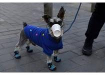 como pasear a tu perro durante la cuarentena