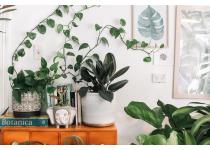 en invierno como cuidar tus plantas de interior