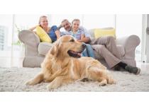 las mascotas en la propiedad horizontal