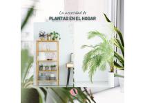 la necesidad de plantas en el hogar