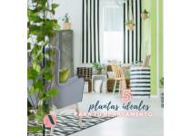 5 plantas ideales para tu apartamento
