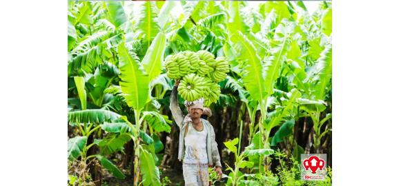 la mayor produccion bananera de el oro esta en este canton