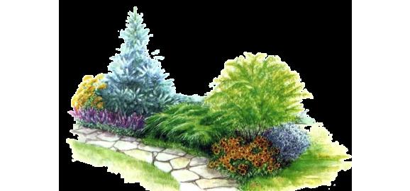 plantas y flores de exterior