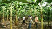 proyectos productivos integrales y sostenibles